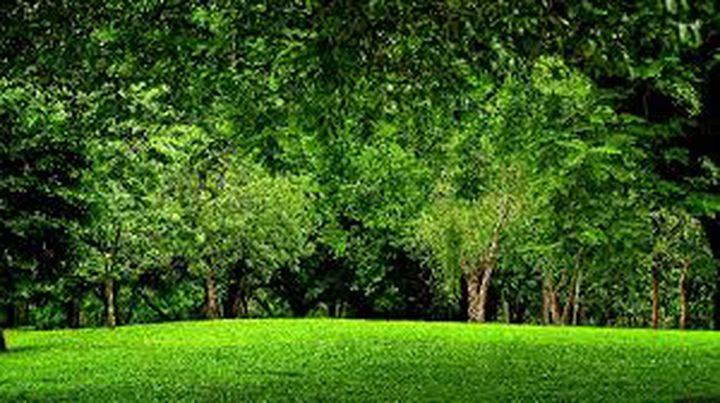 الأشجار ودورها في إطالة العمر وتحسين الوضع الصحي