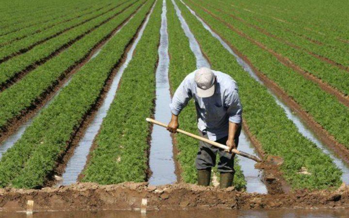 إطلاق خطة العنقود الزراعي بالأغوار الاسبوع المقبل