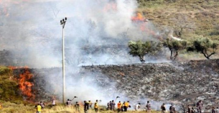 مستوطنون يضرمون النار بأشجار زيتون في سبسطية