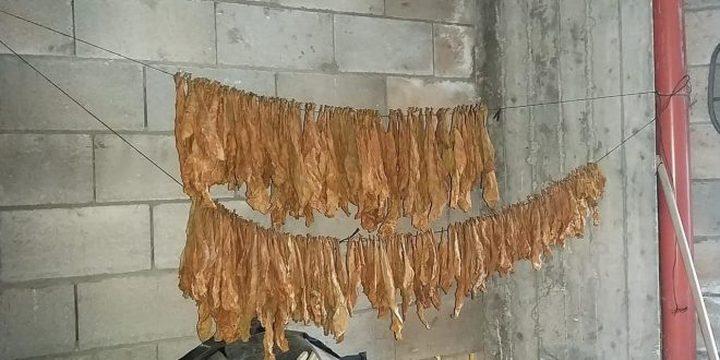 ضبط معملاً لتصنيع وتعبئة الدخان والمعسل في الخليل