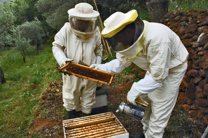 الزراعة تطلق المنتدى العاشر لتربية النحل