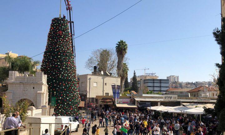 احتفالات بنصب أكبر شجرة ميلاد