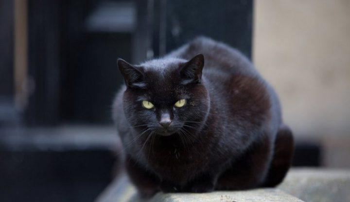 فتاة تنقذ قطة من الشارع لتكتشف أنه فهد