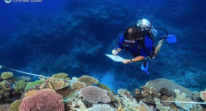 الموسيقى هي الحل الأمثل لإنقاذ الشعاب المرجانية