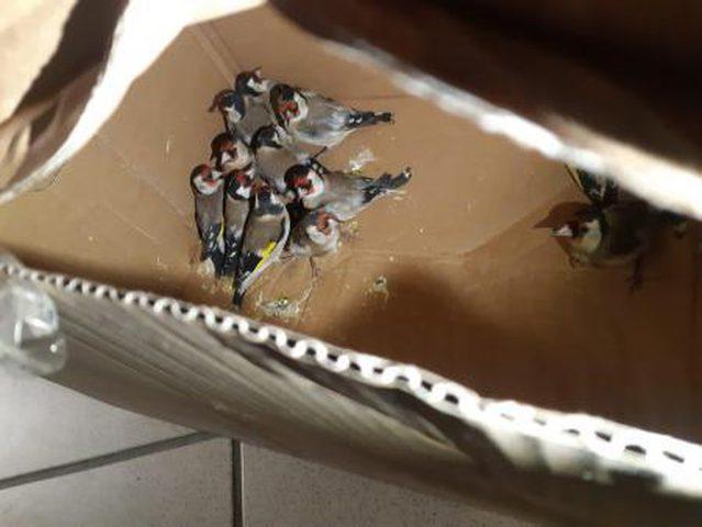جمارك الاحتلال تضبط طيوراً مهربة على معبر الكرامة