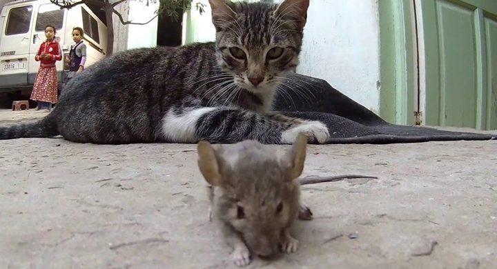 """قط يعود للعمل في الخارجية البريطانية بوظيفة """"صائد فئران"""""""