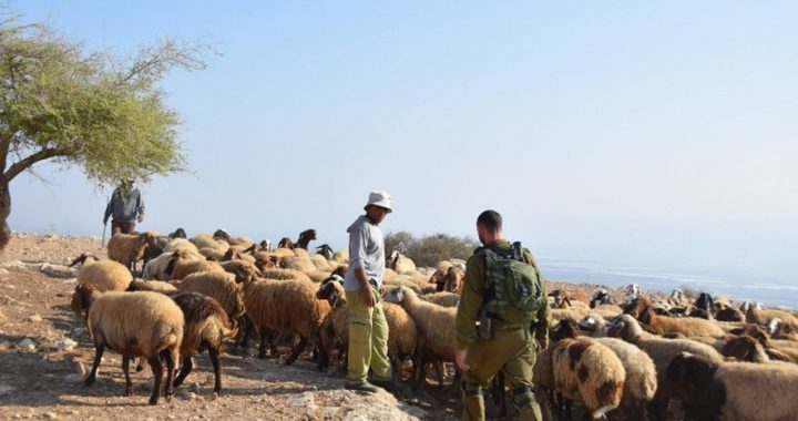 مستوطنون يخرجون الرعاة من أراضيهم بالأغوار الشمالية