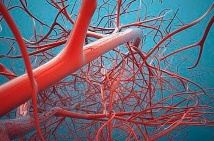 طرق الحفاظ على صحة الأوعية الدموية في الجسم