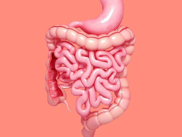 أبرز 7 المعلومات عن صحة الأمعاء