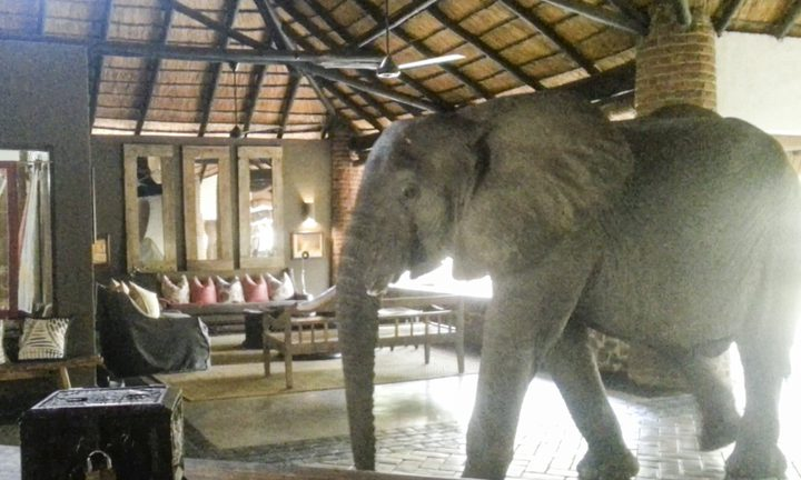"""زامبيا.. أفيال تقتحم مطعما بحثا عن """"فطور"""""""