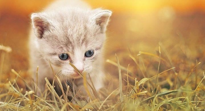 قطة بأطراف اصطناعية تتحول إلى نجمة