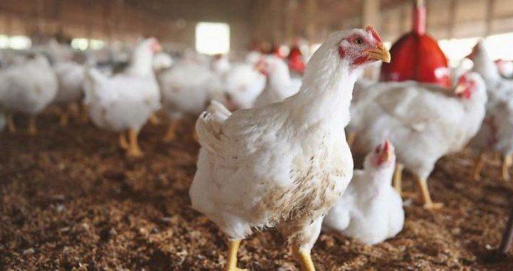 الزراعة توجه ارشادات هامة للمزارعين ومربي الدواجن بخصوص المنخفض