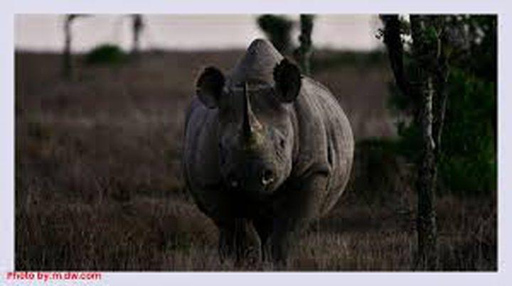 """عن عمر 57 عاما.. نفوق """"عميدة حيوانات وحيد القرن في العالم"""""""