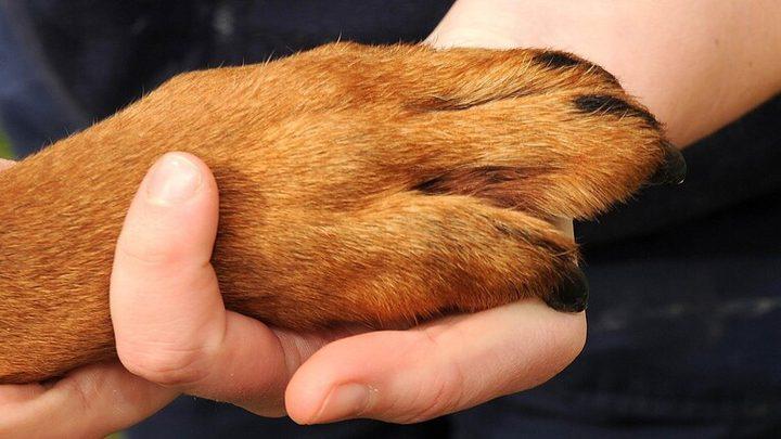 الأخطار الكامنة فيما يعلق بأرجل الحيوانات الأليفة