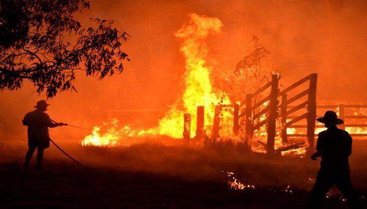 الحرائق تتسبب في مقتل نصف مليار حيوان في أستراليا