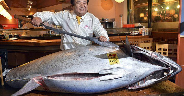 اليابان.. بيع سمكة التونة ذات الزعنفة الزرقاء بنحو مليوني دولار