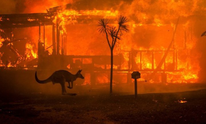 نفوق أكثر من مليار حيوان جراء حرائق أستراليا