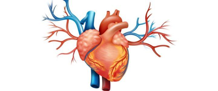 ما هي علاقة نزلات البرد بصحة القلب ؟