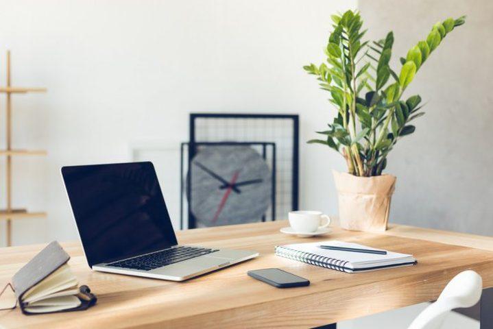 دراسة: النباتات المكتبية تقلل من الإجهاد خلال العمل