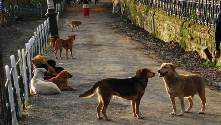 الهند.. كلاب تقتل طفلا حديث الولادة حتى الموت داخل غرفة العمليات!