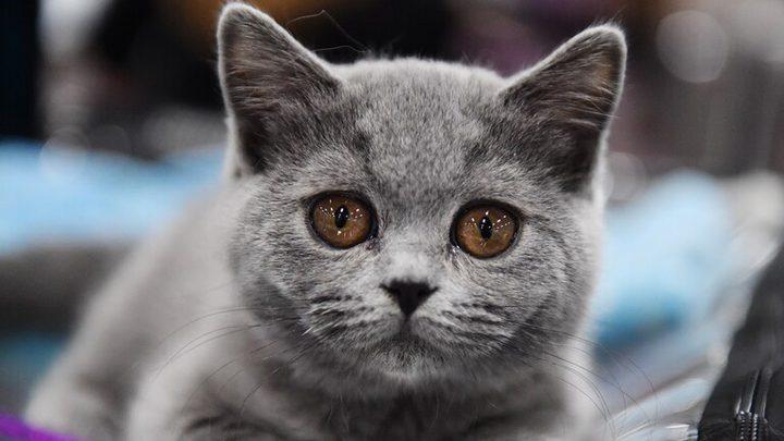 """قطة """"منقطعة النظير"""" بعشرين مليون روبل"""