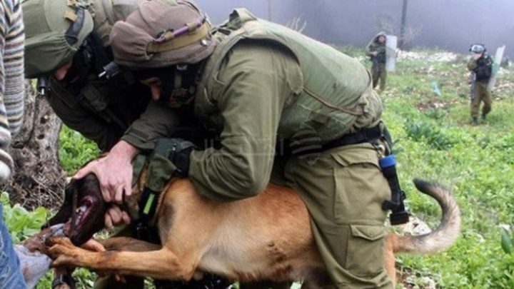 الهيئة: الاحتلال ترك كلب بوليسي ينهش رقبة فتى قاصر خلال الاعتقال