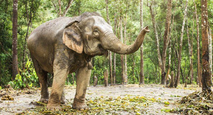 فيل ضخم يتجول داخل فندق ويثير دهشة النزلاء