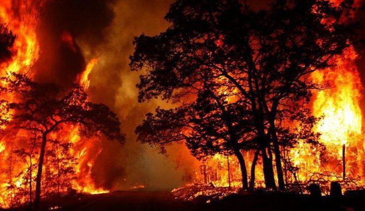 وأخيرا.. إكتشاف فائدة مفاجئة لحرائق غابات أستراليا