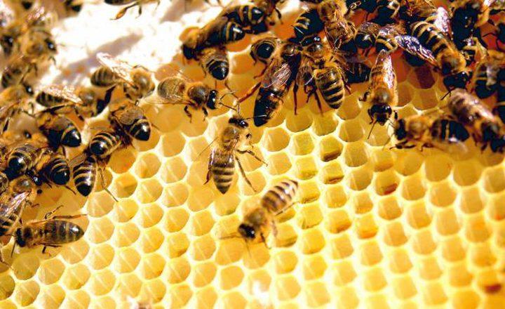 شركة تونسية تطور جهاز استشعار لزيادة مردودية العسل