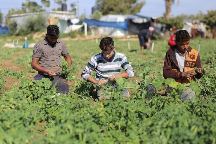 نابلس: مزارعون يتمكنون من زراعة أراضيهم بعد 20 عاما من المنع