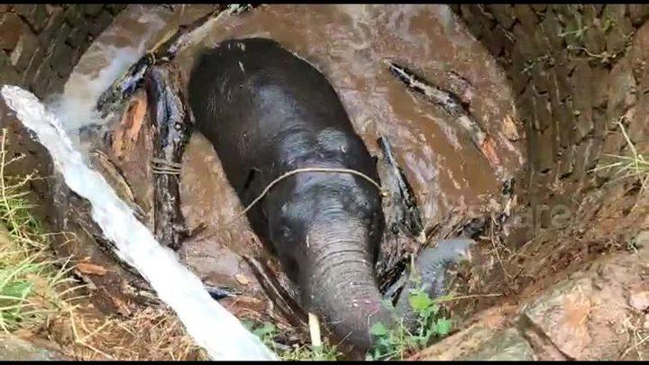 الهند.. خطة مبتكرة لإنقاذ رضيع فيل سقط في بئر