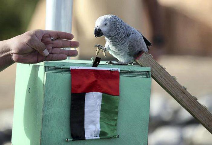 أبو ظبي.. شركة تدرب الطيور على التقاط القمامة
