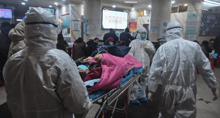 في بؤرة الوباء.. مستشفى يطعم مرضى الكورونا سلاحف برية !