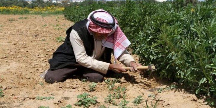 وزير الاقتصاد: اجراءات حكومية لدعم المزارع الفلسطيني