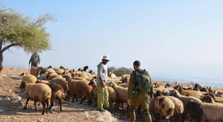 الاحتلال يلاحق رعاة الأغنام في الأغوار الشمالية