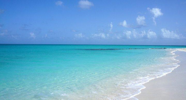 العثور على مخلوق غامض على شاطئ مكسيكي