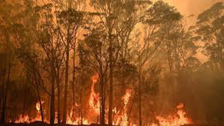 75% من الأستراليين تأثروا بحرائق الغابات المدمرة
