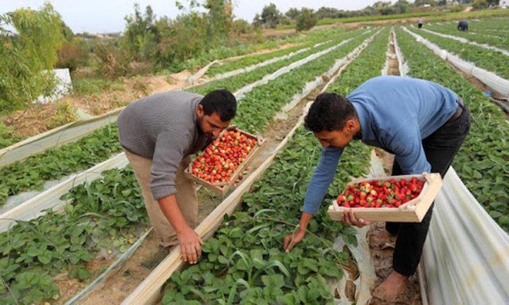 مفاوضات لإنهاء قرار منع تصدير المنتجات الزراعية الفلسطينية