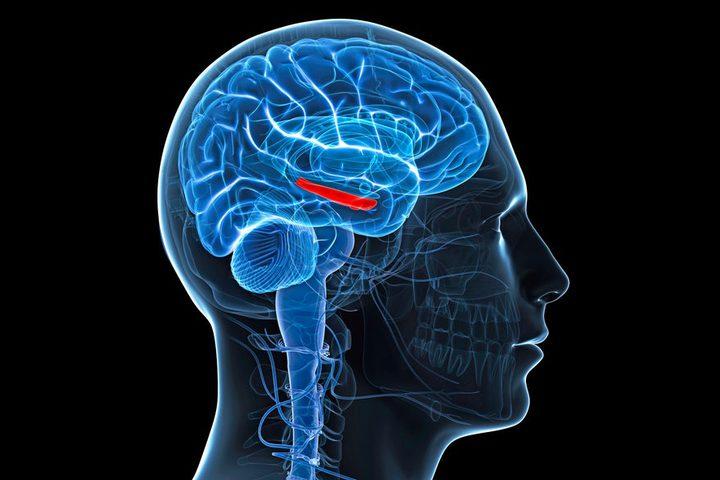 مكملات غذائية لحماية الدماغ