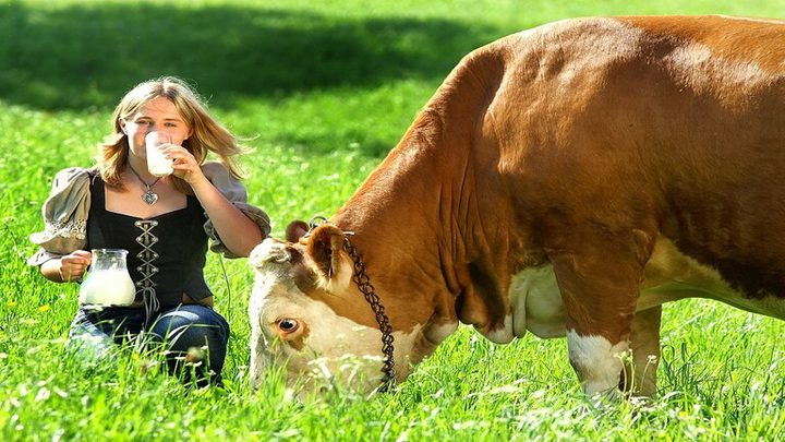 اكتشاف مادة في حليب ولحم البقر تسبب سرطان القولون