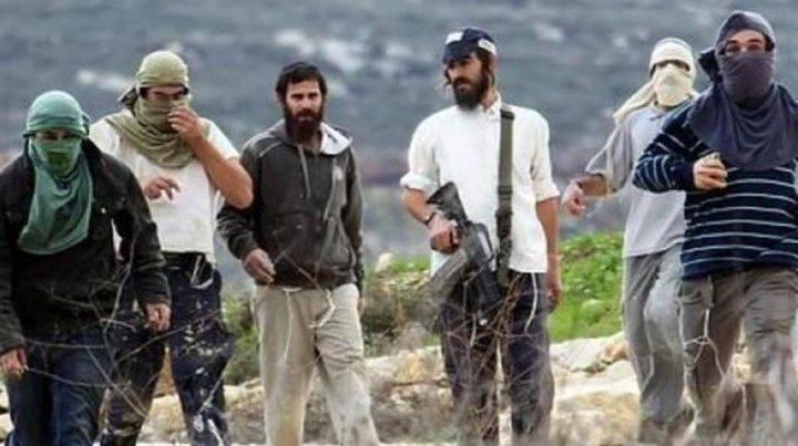 مستوطنون يطردون الرعاة من تجمع شلال العوجا شمال أريحا