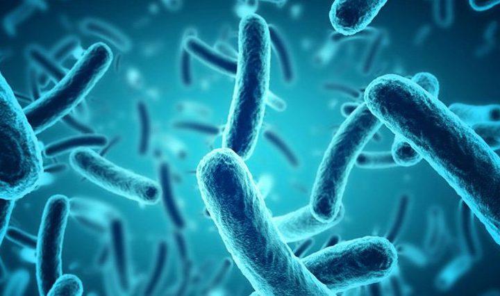 تحذير: بكتيريا الأمعاء يمكن أن تنذر الإصابة بمرض خطير