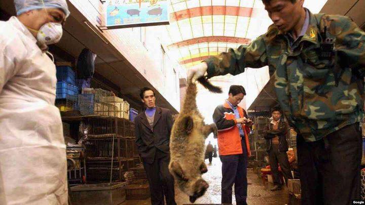 مدينة صينية تجرّم الحيوانات البرية بسبب الكورونا