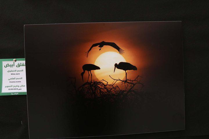 افتاح معرض صور الحياة البرية والطيور في جامعة النجاح