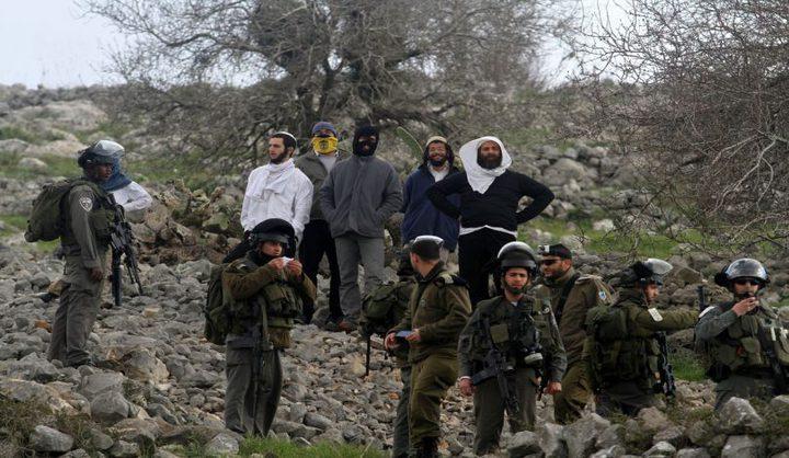 مستوطنون يقتلعون 200 شتلة زيتون في المغير شرق رام الله