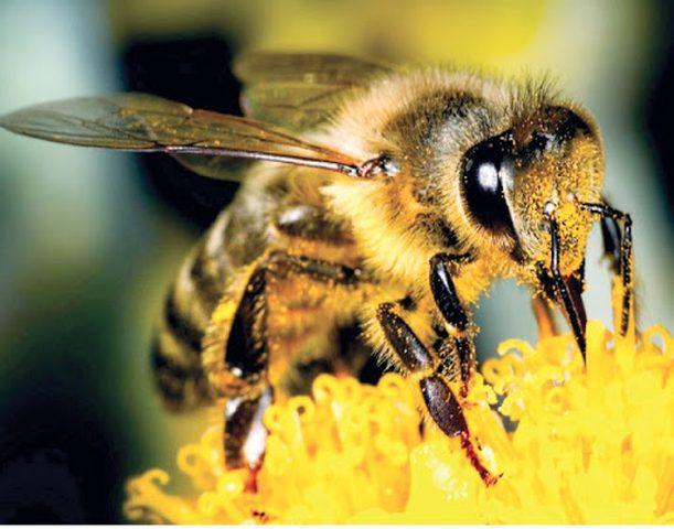 دراسة تكشف لامتلاك النحل الطنان قدرة عجيبة