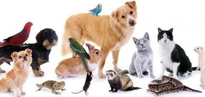 خبراء: لا يمكن للحيوانات الأليفة أن تكون مصدرا للكورونا