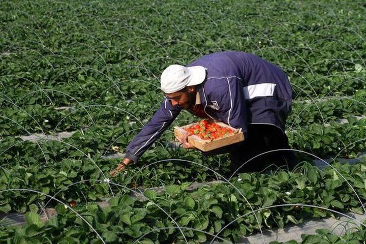 """زراعة غزة: القطاع الزراعي لم يتأثر بـ""""كورونا"""""""