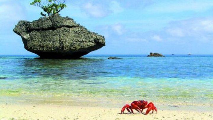 علماء: اكتشاف في جزيرة كريسماس يعيد رسم خارطة الحياة
