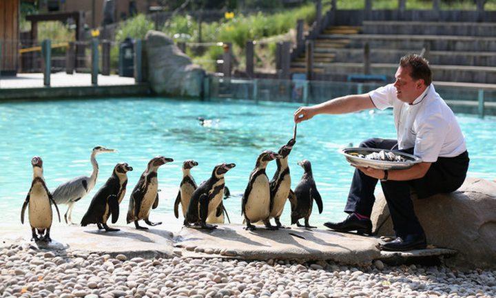 إغلاق أبواب أقدم حديقة حيوان في العالم بسبب كورونا